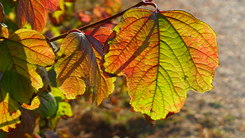 leafy details | by nchenga