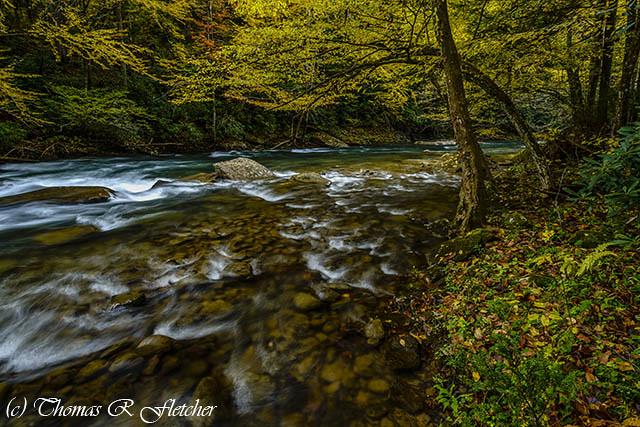 Back Fork of Elk River Fall Colors