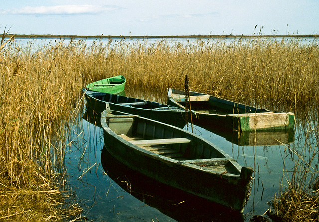 Barques a l'Ebre / Old boats in the marsh