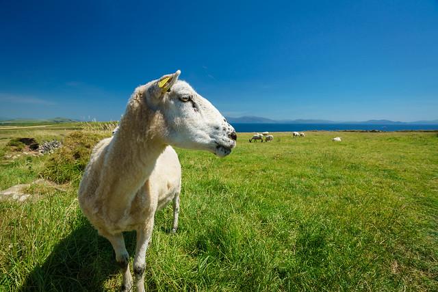 Irland, Dingle Peninsula