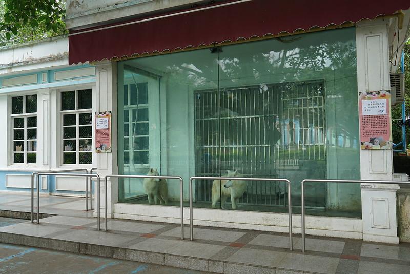 CCA investigation into Shenzhen Xiaomeisha Ocean World