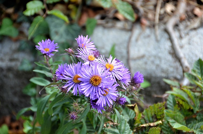Aster 07.10 (1)
