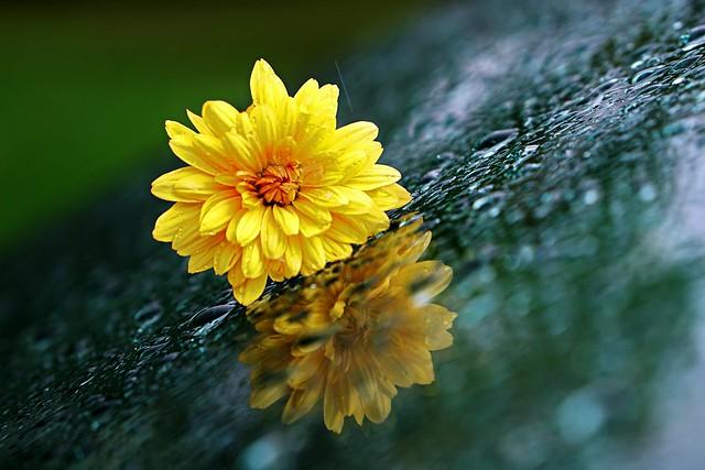 Autumn, Mum, Rain, Windshield