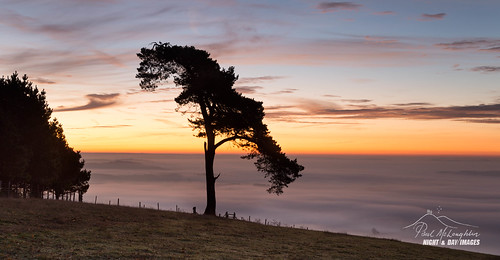devon trees raddonhill sunrise mist fog valley thorverton crediton exe forrest wood woods lonepine