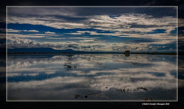 Reflexos a la marjal de Sueca 41 (Sueca's marsh reflections 41) Sueca, la Ribera Baixa, València, Spain