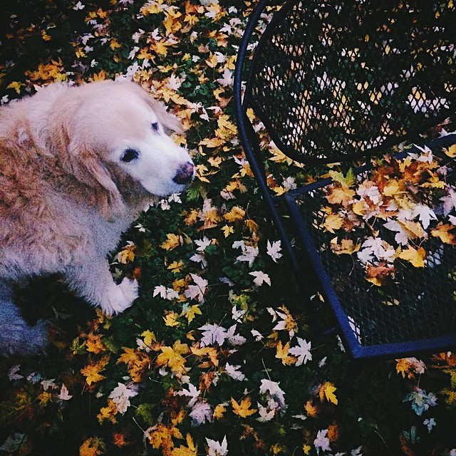 Dogs, Seasons, and Flickr