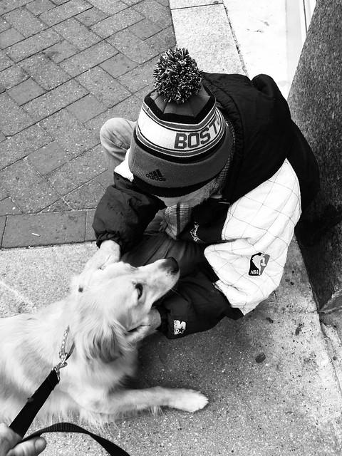 Golden Retriever visiting a homeless man - Boston MA
