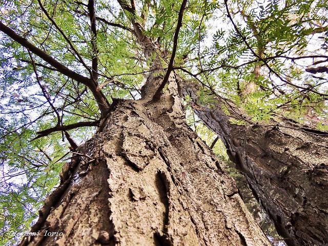 Profumo del bosco