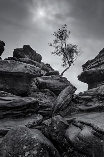 brimhamrocks silverbirch tree rocks northyorkshire blackandwhite mono rain windy pentaxart pentax k70 sigma1770hsm glennreay