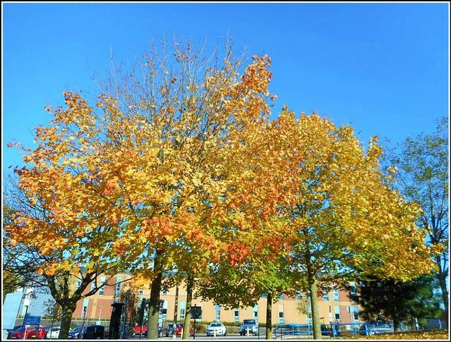 Sure Sign of Autumn ..