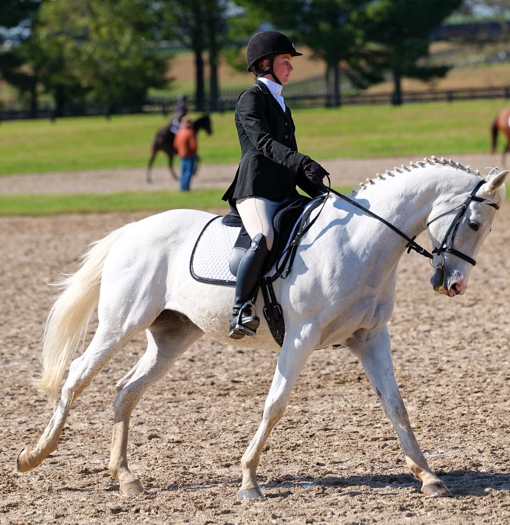 GFX & 250mm f4 GF   Ky Horse Park | GFX & 250mm f4 GF   Ky H… | Flickr