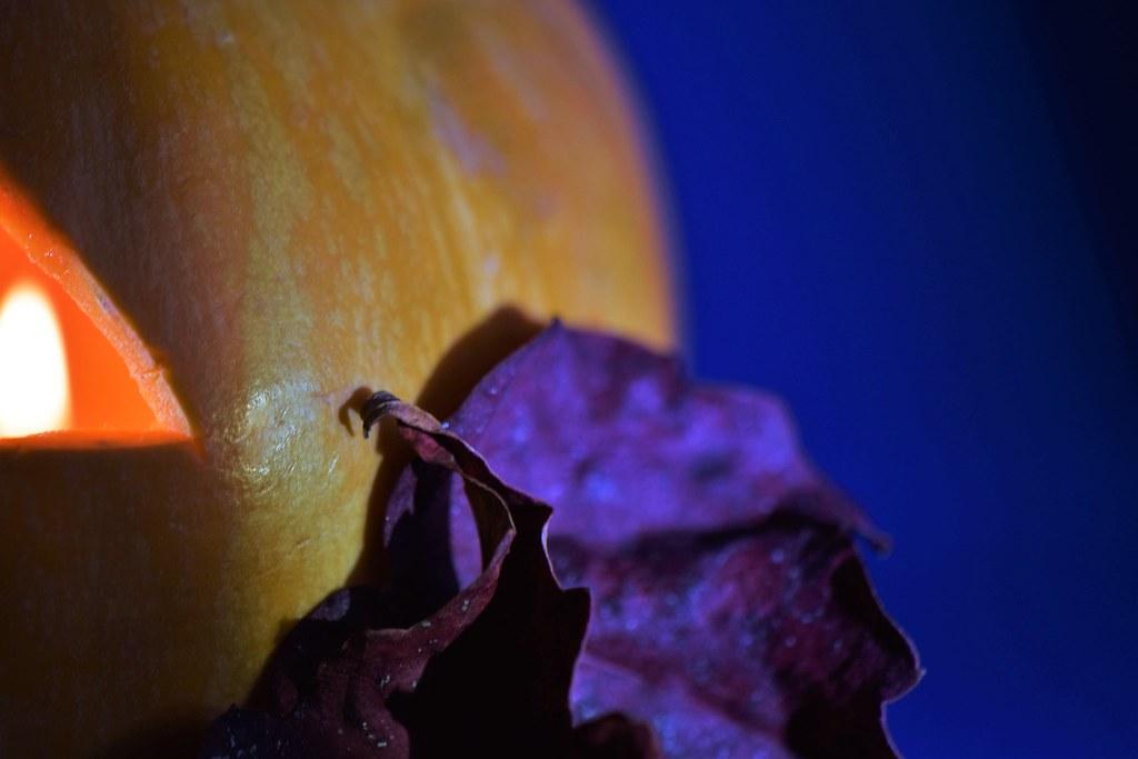 Butternut Squash & dry leaves   -  visual  synecdoche   -    sinécdoque