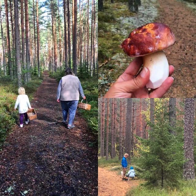 #Dagensfoto #Ransäter #Värmland #Sverige 🍂#KarlJohansvamp #Gammelmormor o #barnbarnsbarn Foto: Malin Persson