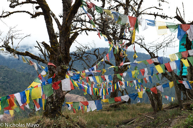 Prayer Flags Hung Between Trees