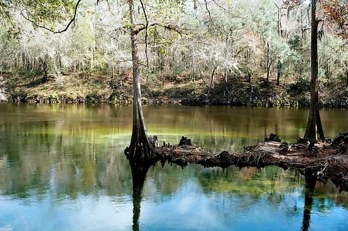 35mm film canonae1 canonfd canonfd35mmf2ssc cypress tree river florida madisonbluespringstatepark withlacoocheeriver panhandle madison swamp south kodakportra160