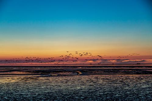 sonnenuntergang farben meer gänse kitsch nordsee urlaub nordstrand schleswigholstein deutschland de