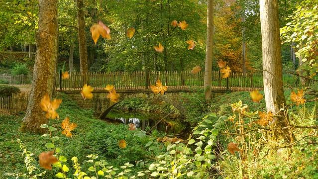 Autumn - 6064