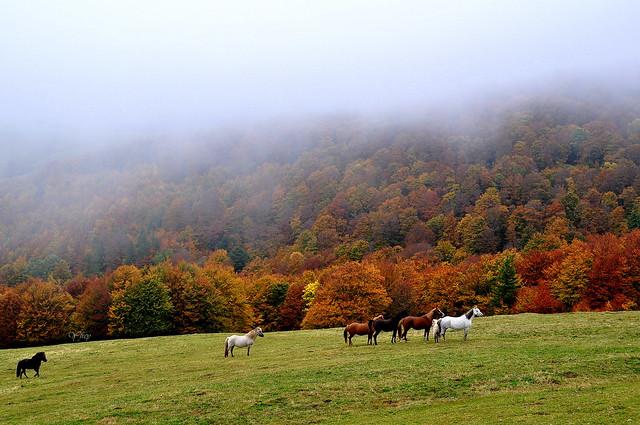 3/3 Couleurs pour le massif du Hohneck (Alsace/Vosges - France )