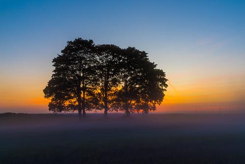 fivetrees trees raitschin upperfranconia germany sunset hof mist bluesky landscape longexpsoure