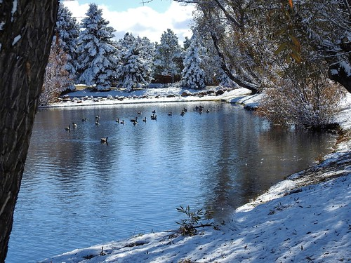 briargate reflectionpond briargatecoloradosprings janeelizabethlazarz walkingcolorado nikon p900 nikonp900 coloradosprings colorado janelazarz breathtakingcolorado water blue pond snow winter snowy birds geese