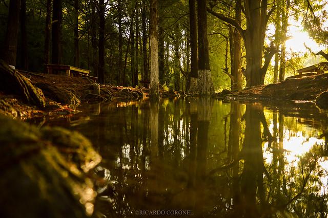 Reflejos de la naturaleza