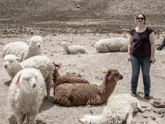 Kate, Alpacas and Lamas, Mountains, Arequipa trip, Peru