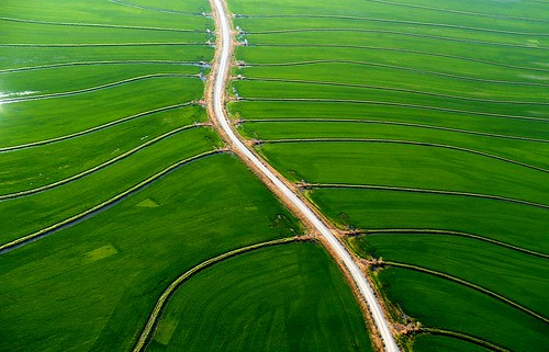 Irrigated rice, California, USA | by water.alternatives