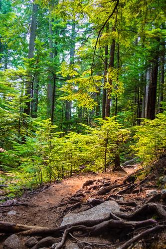 amerique arbre vancouver canada paysage forêt végétation nature america tree vegetal foresttree landscape squamish colombiebritannique ca