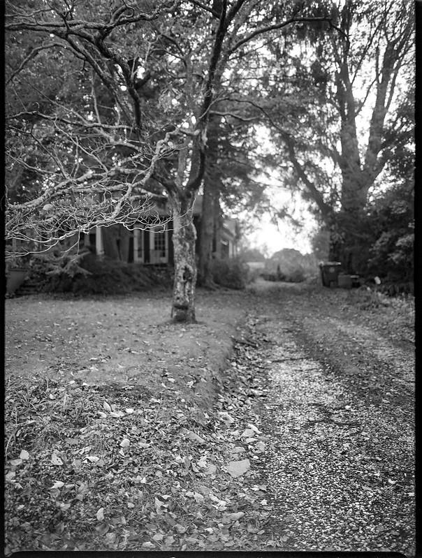 neighborhood driveway, autumn, near dusk, light mist, Blue Ridge Avenue,  Asheville, NC, Mamiya 645 Pro, mamiya sekor 45mm f-2.8, Arista.Edu 200, Ilford Ilfosol 3 developer, 11.2.18