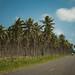 49319-001: Cyclone Pam Road Reconstruction Project in Vanuatu
