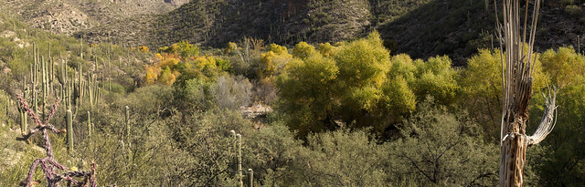 Panorama of Sabino Canyon from the Bluff Trail