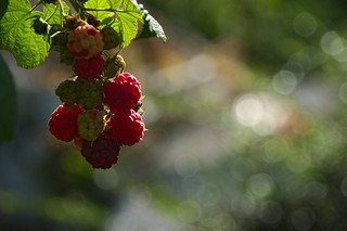 Inviting red fruits | by LB1415