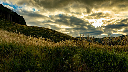 autumn kanagawa pampasgrass sengokuhara september japan grassfield susukigrass landscape hakone clouds 足柄下郡 神奈川県 日本 jp