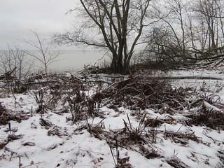 Voka jõesuu, Voka jõgi / Voka river, Estonia