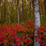 Oregon Fall (Explore)