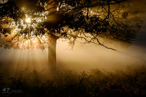 britain british england english europe fall richmondpark september surrey uk unitedkingdom autumn beautiful magical mist serene sunrise trees woodland woods