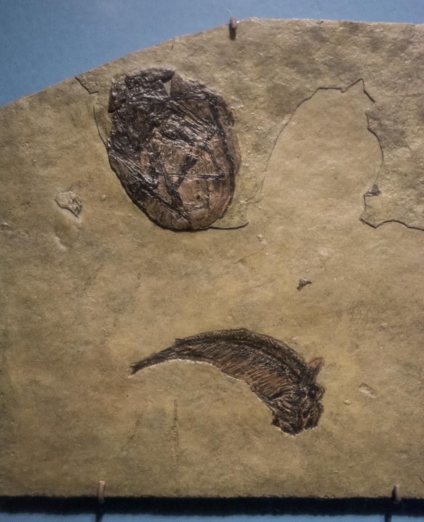 Afbeeldingsresultaat voor pterosaur egg