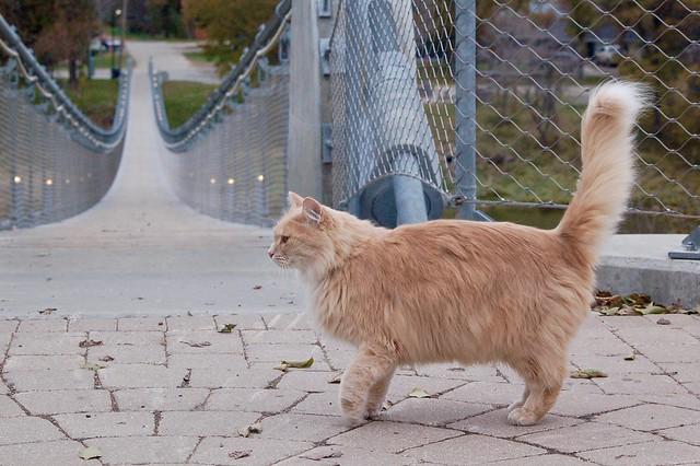 Souris cat walk!