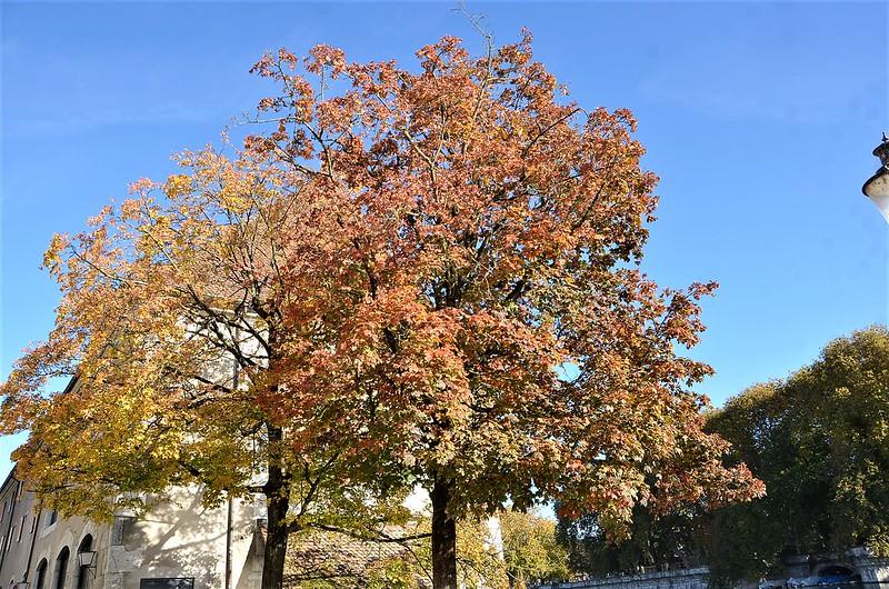 Autumn Trees 25.10 (4)
