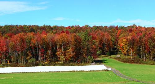 fall autumn automne québec quebec qc estrie foliage easterntownships canada landscape paysage explore explored