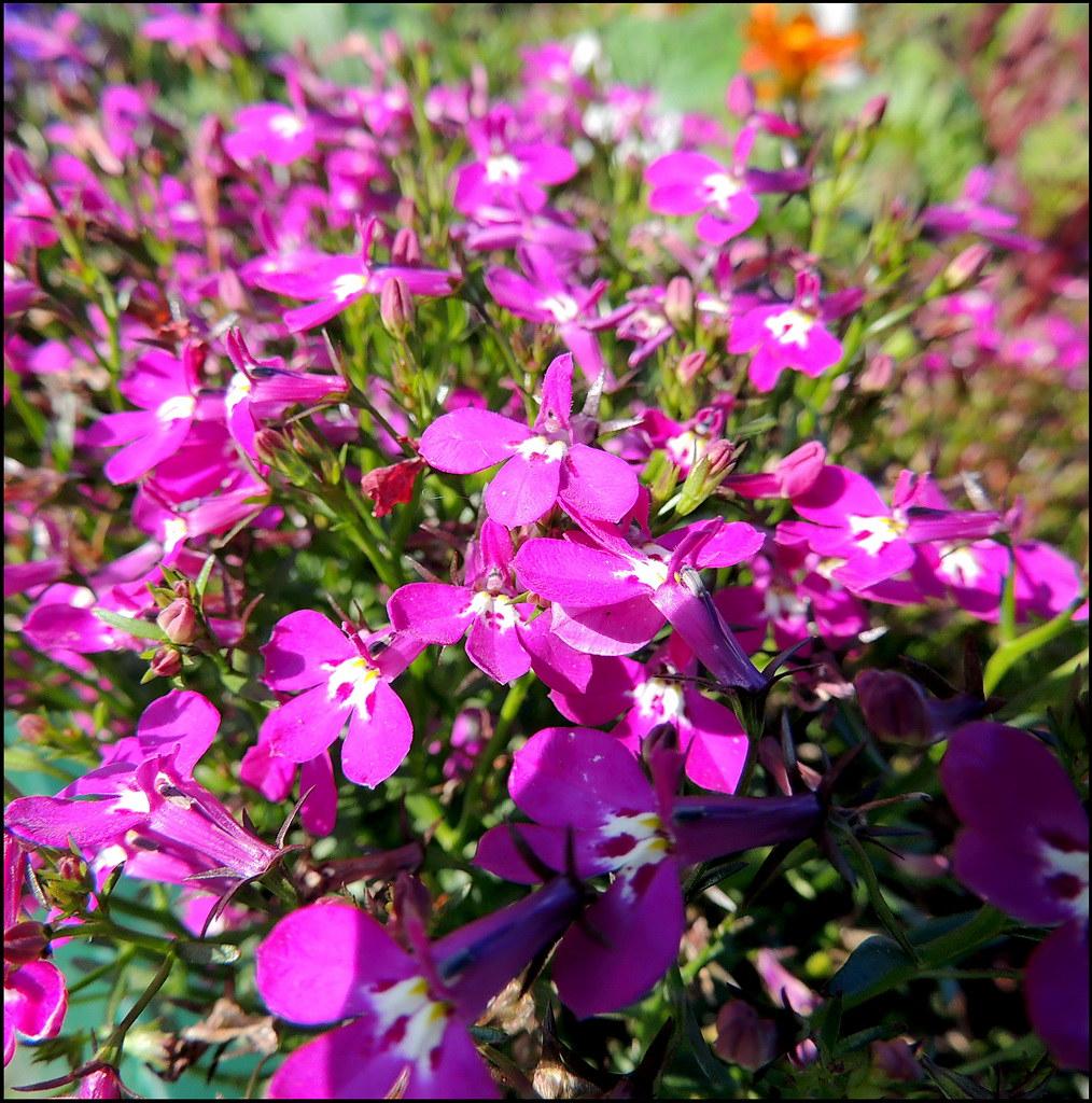 Касарги 8817 Flores