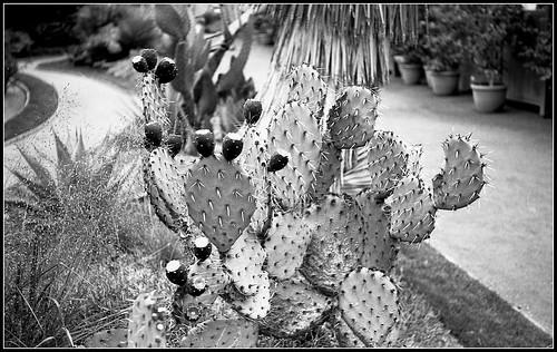 Jardin botanique | by Bokey Shutter