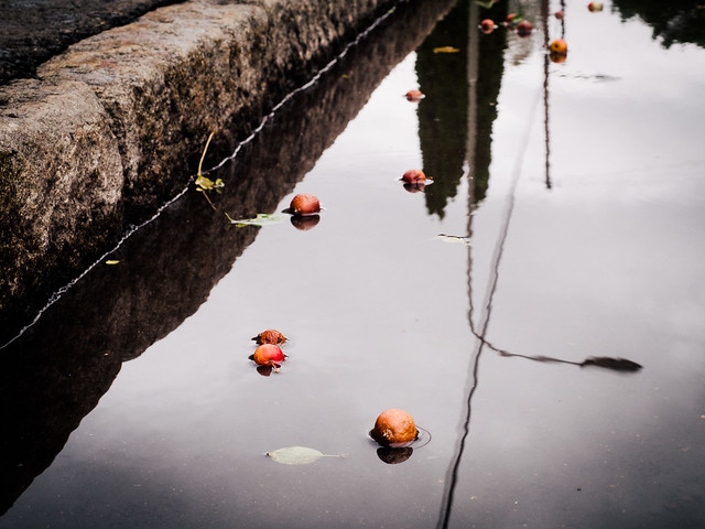 Plums in water