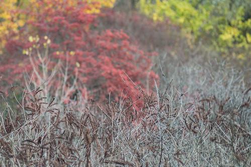autumn nature ukraine travel kremenchuk
