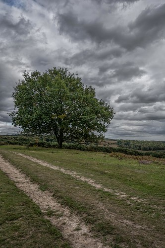 path nikon d7100 topazclarity autumn tamron1024f3545diiivchld tree eastsussex ashdownforest clouds england moody bleak