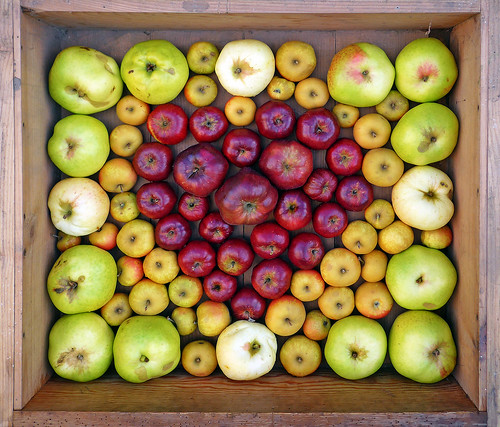 Love Apples | by Andrew Gustar