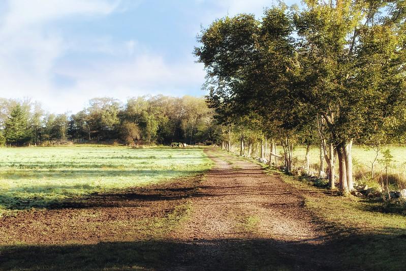 Common Pasture