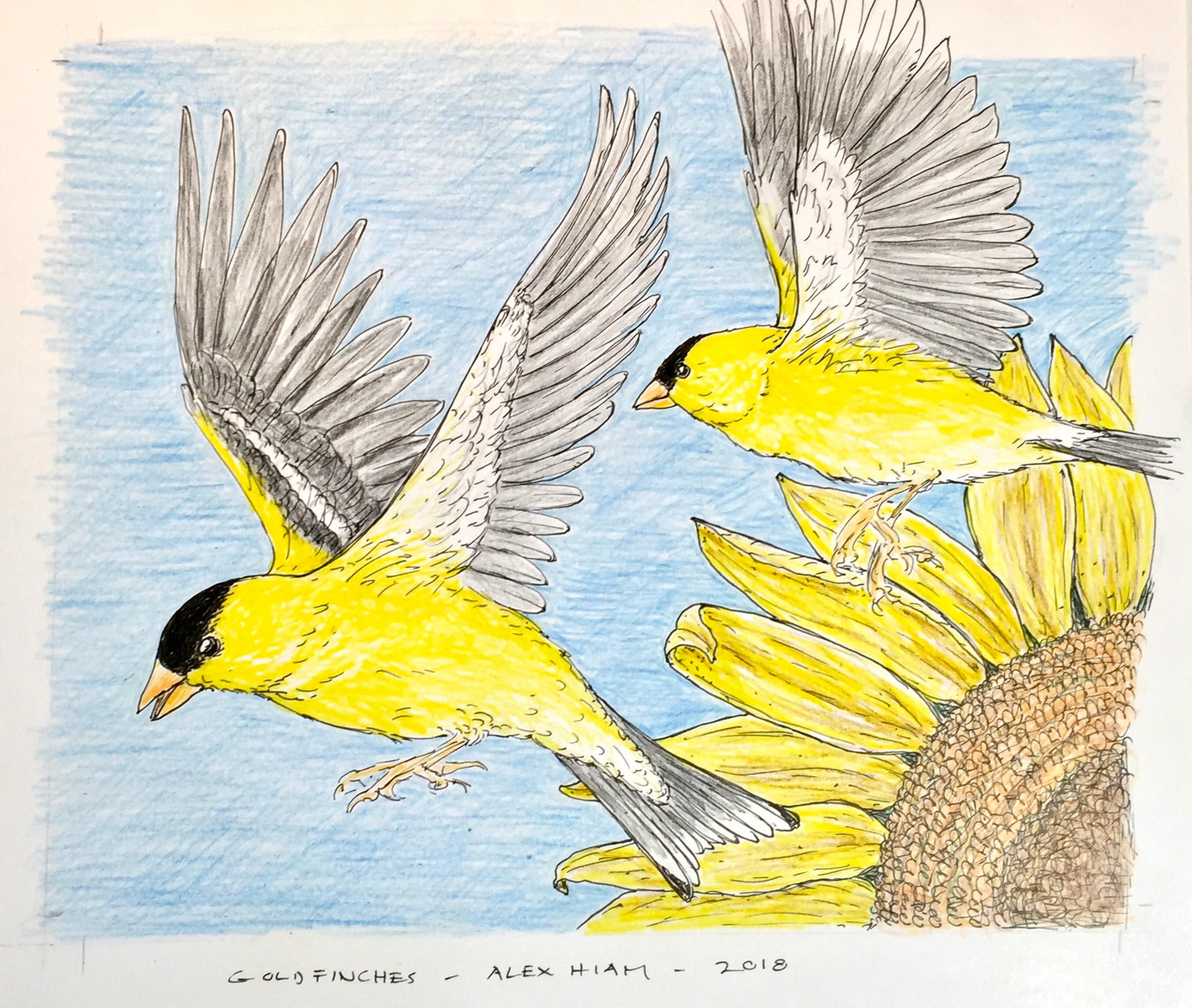 Goldfinches&Sunflower