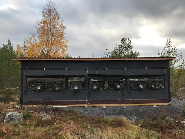 Golden Eagle photography in Utajärvi