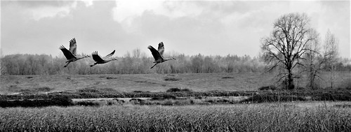 Flight -- Sauvie Island, Oregon | by ginamariewilliams1